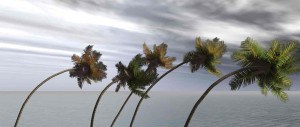 Palm trees bent nearly horiztonal by hurricane-force winds.
