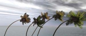 Palms During a Hurricane
