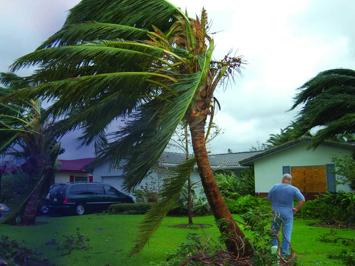 Wind whips a palm tree