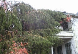 Image showing a large pine that fell on the home's porch.