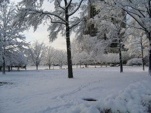 A park with several inches of snow on the ground and the trees covered with frost and snow.